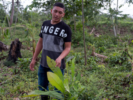 Photo: Ramón gives a tour of the land that his family owns, showing the diversity of flora that has been taken over by palm oil plantations. (Photo credit: Thom Pierce | Guardian | Global Witness | UN Environment)