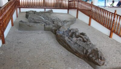 Headline photo of the Kronosaurus Boyacensis fossil in Villa de Leyva, Boyacá, Colombia By Edward M Johnson - FunkMonk, CC BY-SA 2.0, https://commons.wikimedia.org/w/index.php?curid=11475799